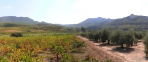 Trek&Wine in Southern Priorat (4 days)